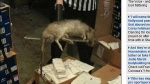 Veja foto: Rato de quase um metro de comprimento aparece em loja de Nova York